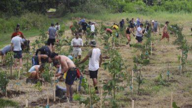 Photo of A dos años de María: Para la Naturaleza ha sembrado 70 mil árboles nativos con la ayuda de 7 mil voluntarios