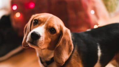 Photo of Algunos consejos para calmar a las mascotas durante fiesta de fin de año