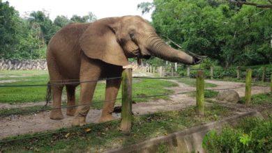 Photo of DRNA asegura animales del zoológico de Mayagüez están en buen estado