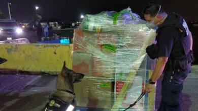 Photo of Aduana incauta Viagra pirateada y otras drogas en carga aérea